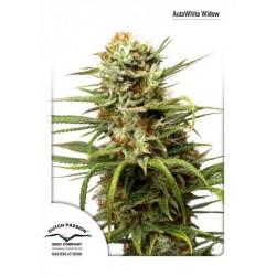 Auto White Widow 3 Sem Dutch Passion