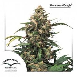 Strawberry Cough 3 Semillas Dutch Passion