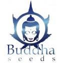 Manufacturer - buddha seeds